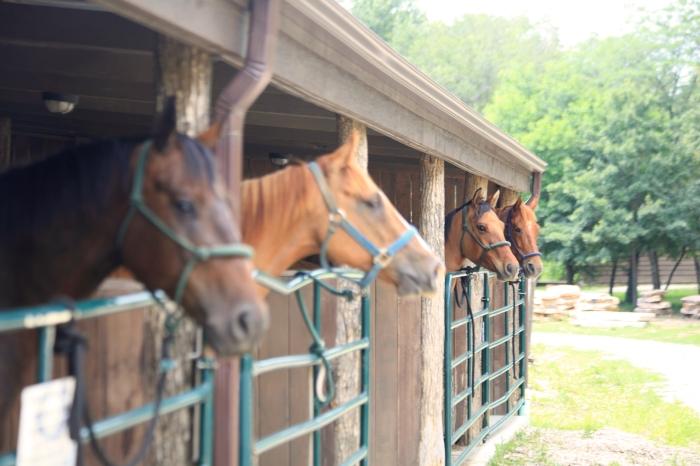Horses-HorsesInStalls1