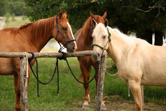 Horses-ThreeHorses